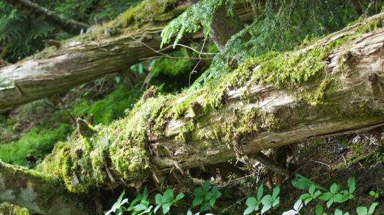 tree falls png