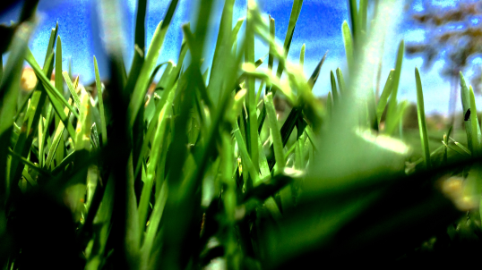 Green Grass png